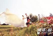 苏州蝴蝶树--纯色婚礼