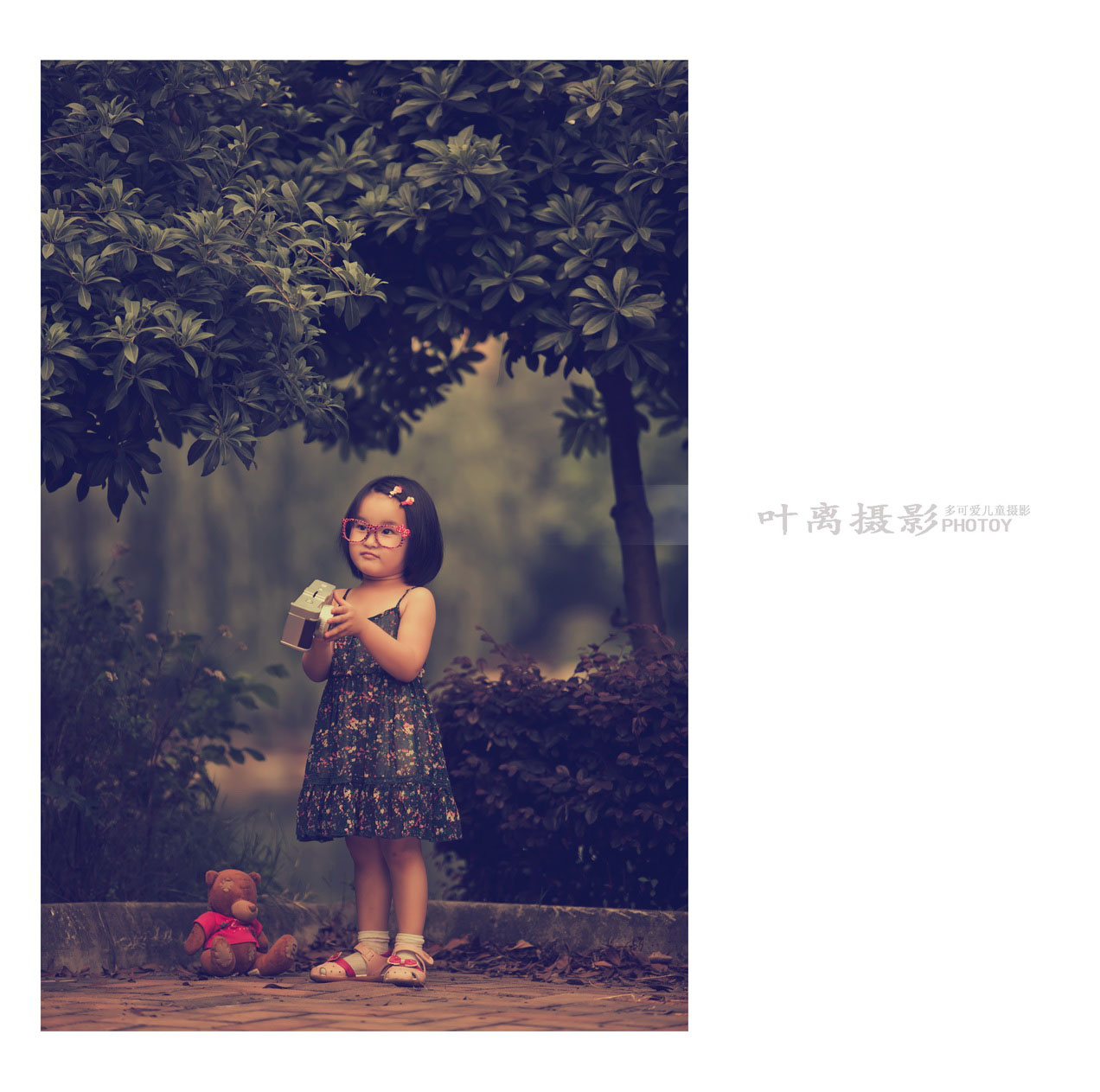 杨梅树下的小小摄影师