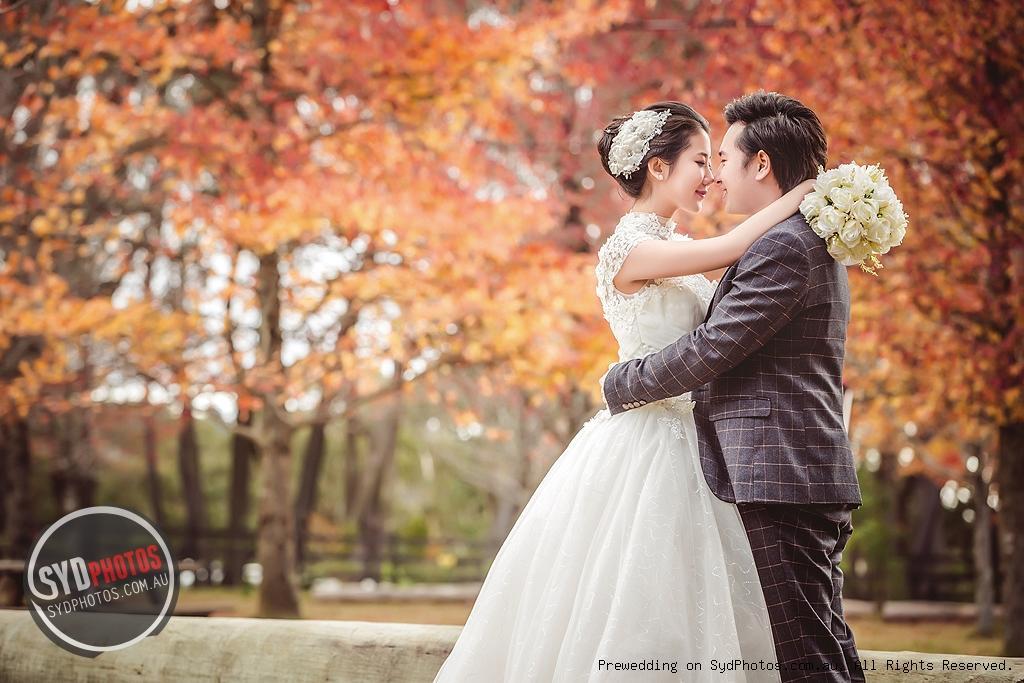唯美的暖色树林婚纱照 复原童话场景