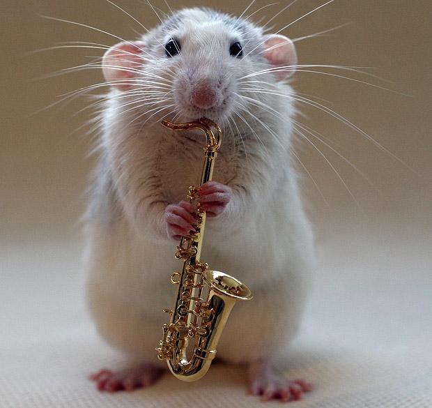 演奏乐器的可爱老鼠(组图)